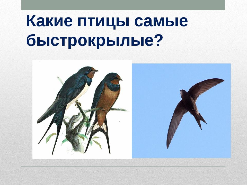 Какие птицы самые быстрокрылые?
