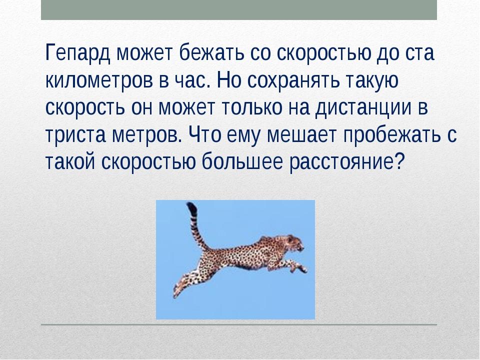 Гепард может бежать со скоростью до ста километров в час. Но сохранять такую...