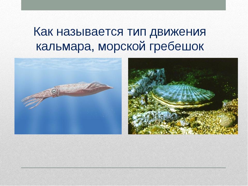 Как называется тип движения кальмара, морской гребешок