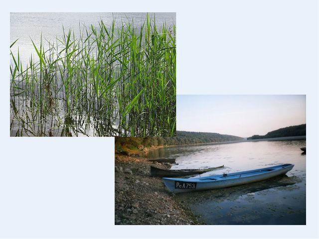 Осока і річка Дунай
