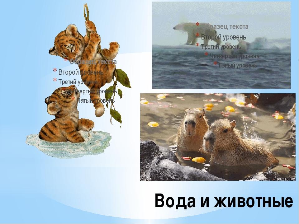 Вода и животные