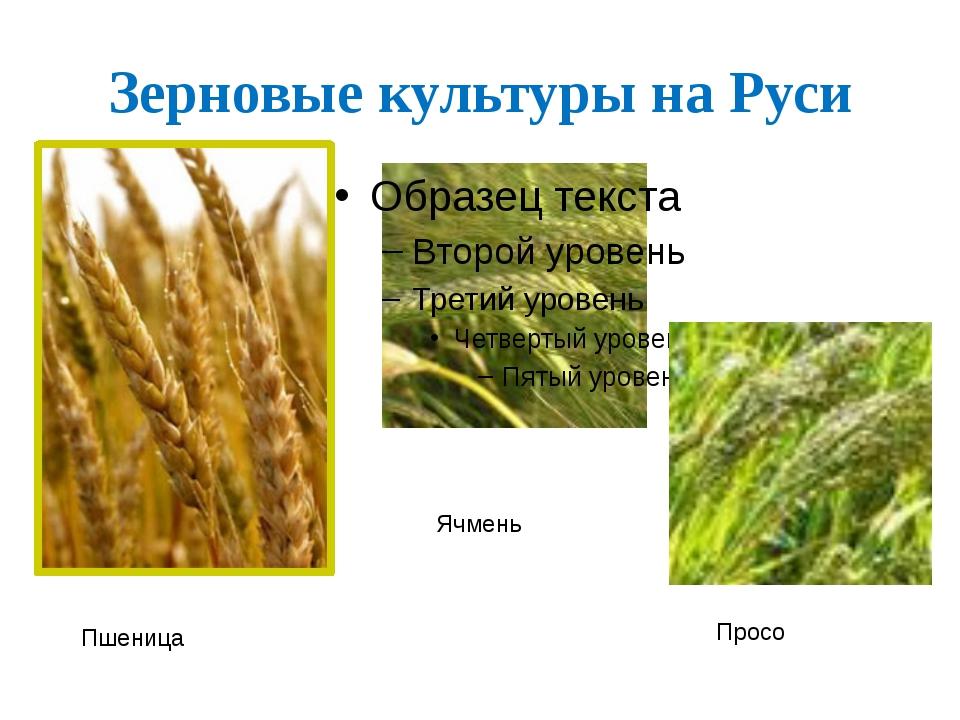 Зерновые культуры на Руси Пшеница Просо Ячмень