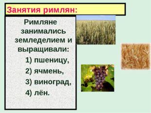 Занятия римлян: Римляне занимались земледелием и выращивали: 1) пшеницу, 2) я