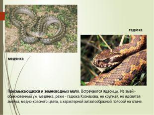 Пресмыкающихся и земноводных мало. Встречаются ящерицы. Из змей - обыкновенны