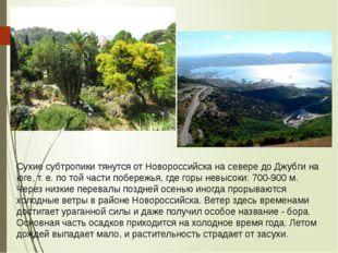 Сухие субтропики тянутся от Новороссийска на севере до Джубги на юге, т. е. п
