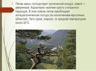 Летом здесь господствует тропический воздух, зимой — умеренный. Характерно на