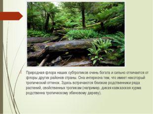 Природная флора наших субтропиков очень богата и сильно отличается от флоры д