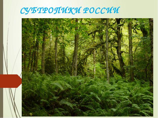 СУБТРОПИКИ РОССИИ