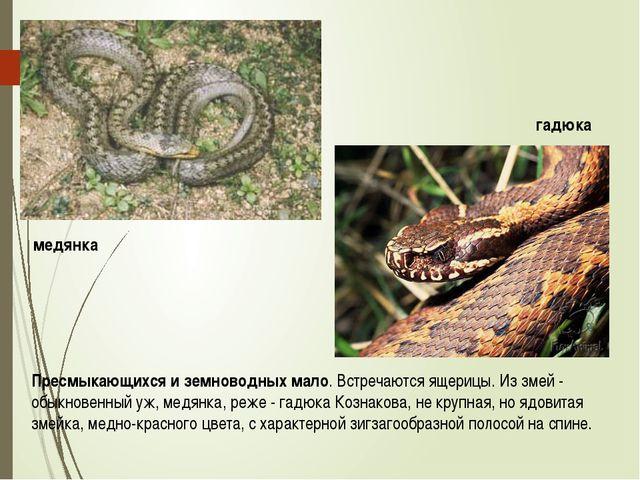Пресмыкающихся и земноводных мало. Встречаются ящерицы. Из змей - обыкновенны...
