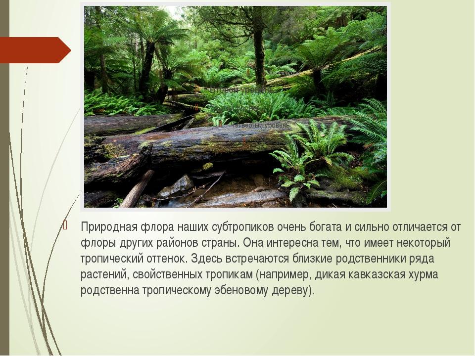 Природная флора наших субтропиков очень богата и сильно отличается от флоры д...