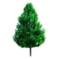 C:\Documents and Settings\User\Рабочий стол\tree2 (1).jpg