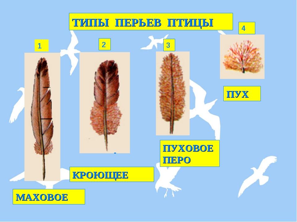 Виды перьев птицы картинки
