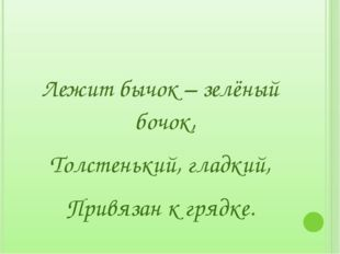 Лежит бычок – зелёный бочок, Толстенький, гладкий, Привязан к грядке.