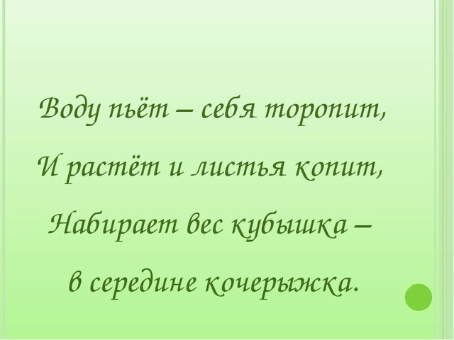 Воду пьёт – себя торопит, И растёт и листья копит, Набирает вес кубышка – в...