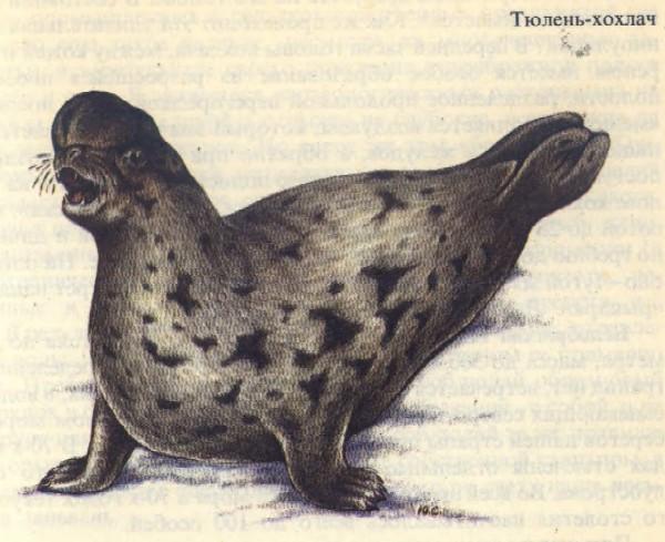 http://www.animalsbb.ru/rb/img/145.jpg