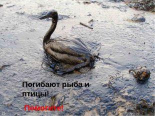 Погибают рыба и птицы! Помогите! 25