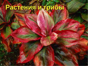 Растения и грибы 8