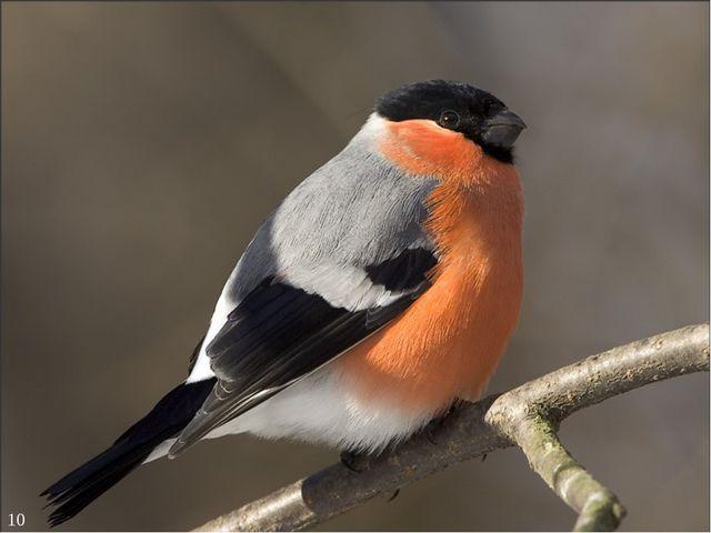 Птицы и звери 10