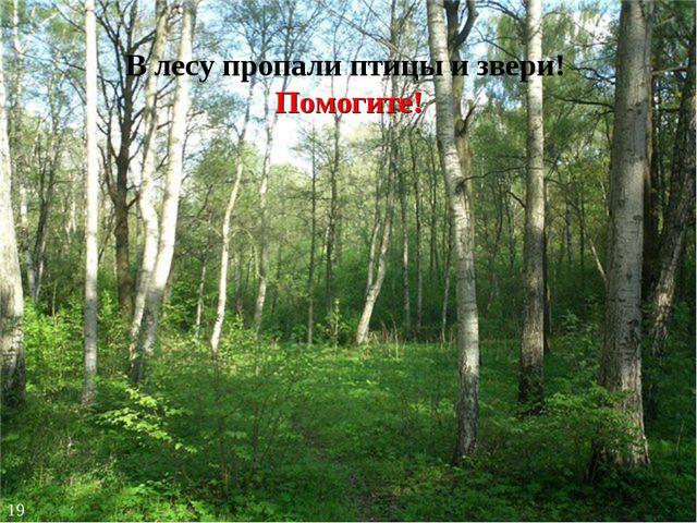 В лесу пропали птицы и звери! Помогите! 19