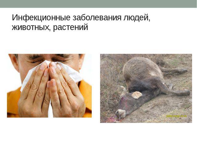 Инфекционные заболевания людей, животных, растений
