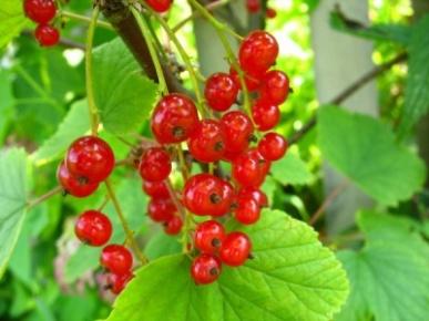 http://mtdata.ru/u4/photoBF3E/20235457605-0/original.jpg