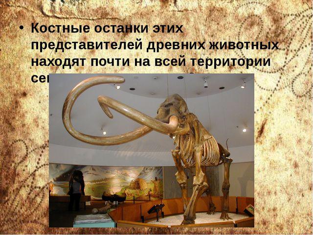 Костные останки этих представителей древних животных находят почти на всей те...
