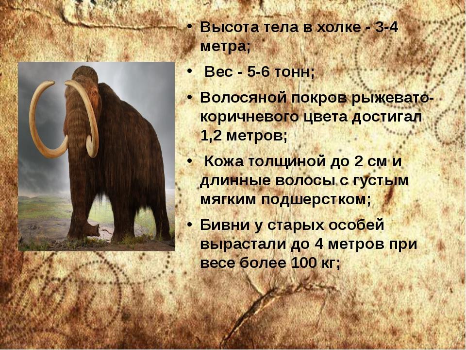 Высота тела в холке - 3-4 метра; Вес - 5-6 тонн; Волосяной покров рыжевато-ко...