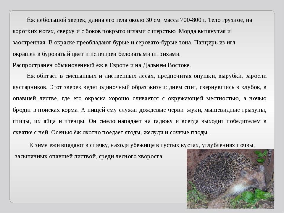 Ёжнебольшой зверек, длина его тела около 30 см, масса 700-800 г. Тело грузн...