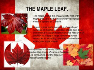 THE MAPLE LEAF. The maple leaf is the characteristic leaf of the maple tree,
