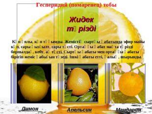Лимон Апельсин Мандарин Гесперидий (помаренец) тобы Көп ұялы, көп тұқымды. Же