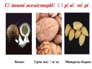 Кокос Грек жаңғағы Миндаль-бадам Сүйекті жемістердің құрғақ түрі