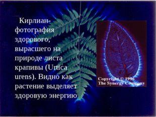 Кирлиан-фотография здорового, вырасшего на природе листа крапивы (Urtica uren