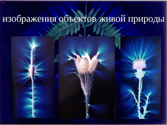 изображения объектов живой природы