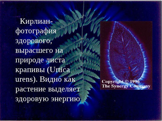 Кирлиан-фотография здорового, вырасшего на природе листа крапивы (Urtica uren...