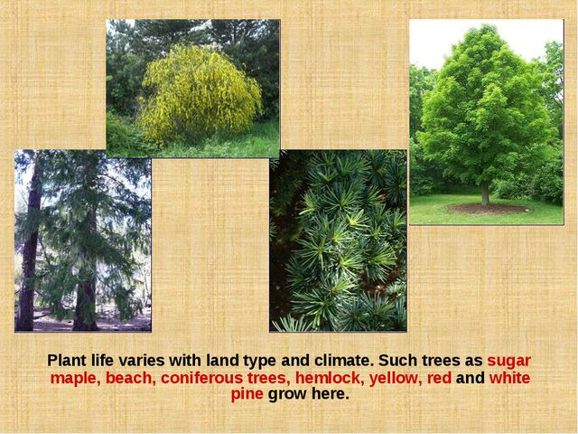 Plant life varies with land type and climate. Such trees as sugar maple, bea...