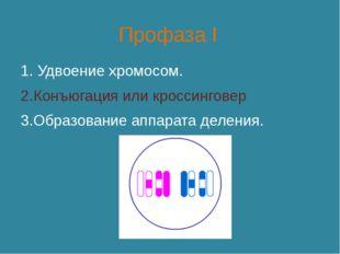 Профаза I 1. Удвоение хромосом. 2.Конъюгация или кроссинговер 3.Образование а