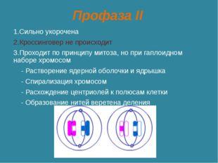 Профаза II 1.Сильно укорочена 2.Кроссинговер не происходит 3.Проходит по прин