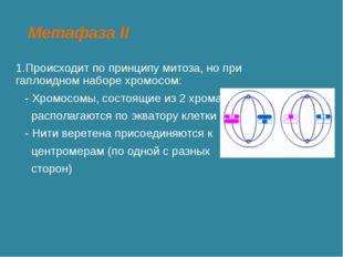 Метафаза II 1.Происходит по принципу митоза, но при гаплоидном наборе хромосо