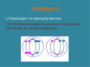 Анафаза II 1.Происходит по принципу митоза 2.К полюсам расходятся дочерние хр