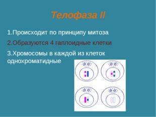 Телофаза II 1.Происходит по принципу митоза 2.Образуются 4 гаплоидные клетки