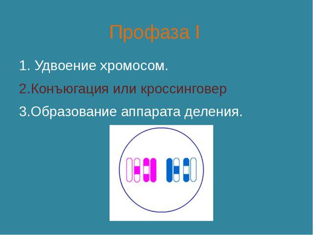 Профаза I 1. Удвоение хромосом. 2.Конъюгация или кроссинговер 3.Образование а...