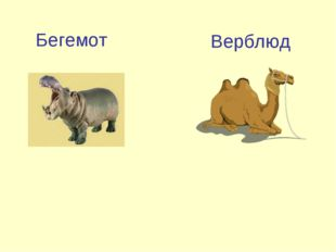 Бегемот Верблюд