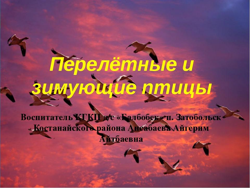 Перелётные и зимующие птицы Воспитатель КГКП д/с «Балбобек» п. Затобольск Кос...