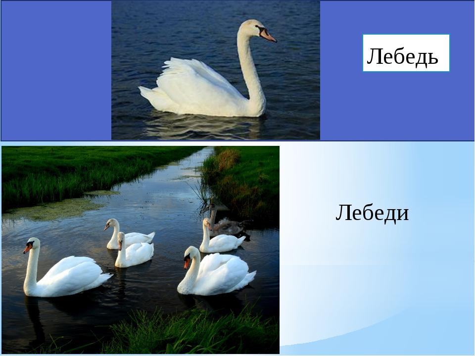 Лебеди Лебедь