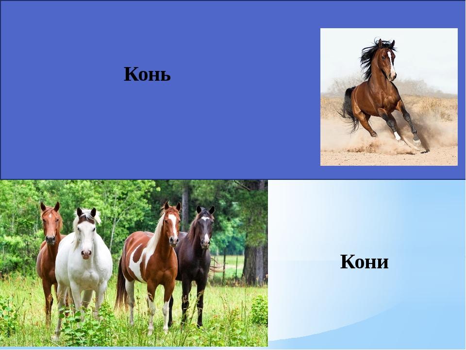 Кони Конь