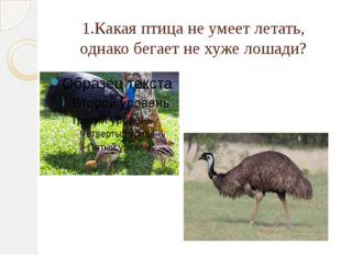 1.Какая птица не умеет летать, однако бегает не хуже лошади?