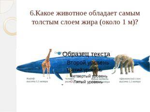 6.Какое животное обладает самым толстым слоем жира (около 1 м)?