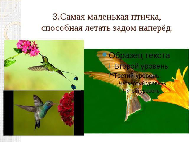 3.Самая маленькая птичка, способная летать задом наперёд.