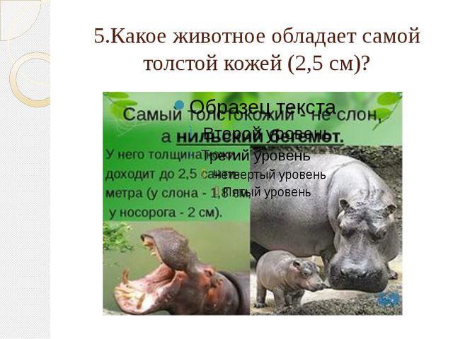 5.Какое животное обладает самой толстой кожей (2,5 см)?