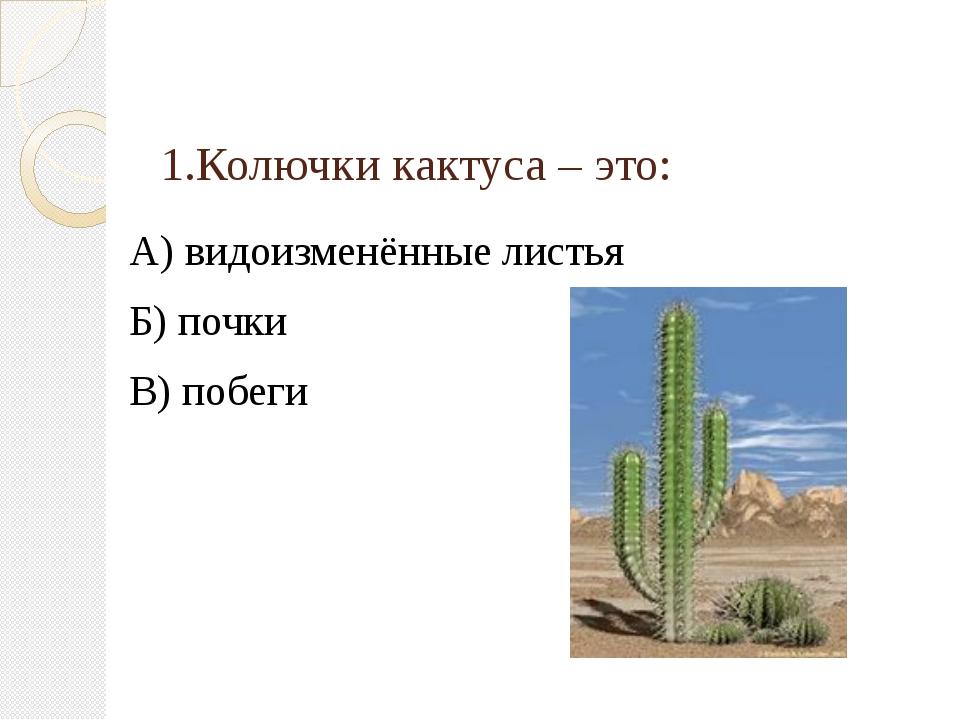 1.Колючки кактуса – это: А) видоизменённые листья Б) почки В) побеги